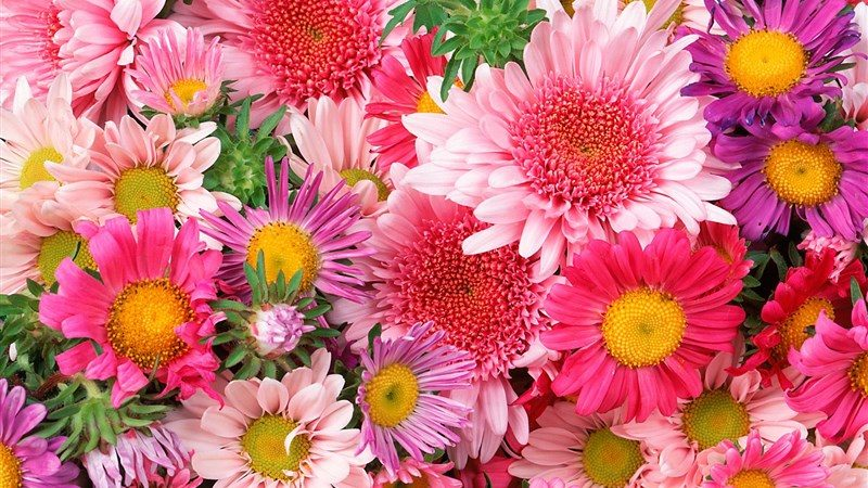27 daisies mums flower
