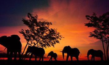 38 elephant africa sunset
