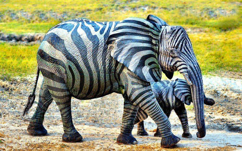 41 zebra elephant