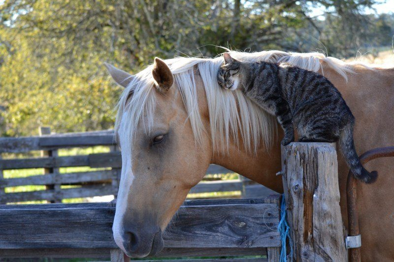 42 horse and cat