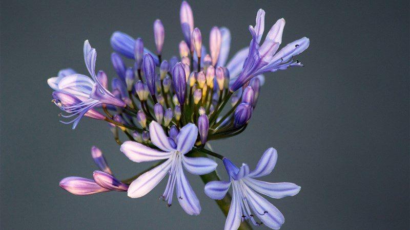 43 flower macro petals bud