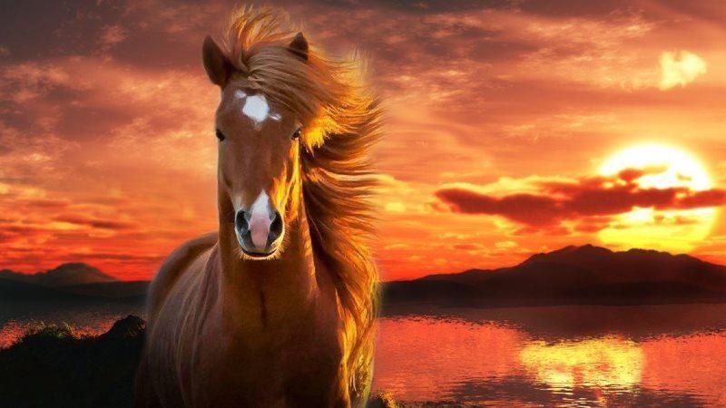 45 horse wallpaper