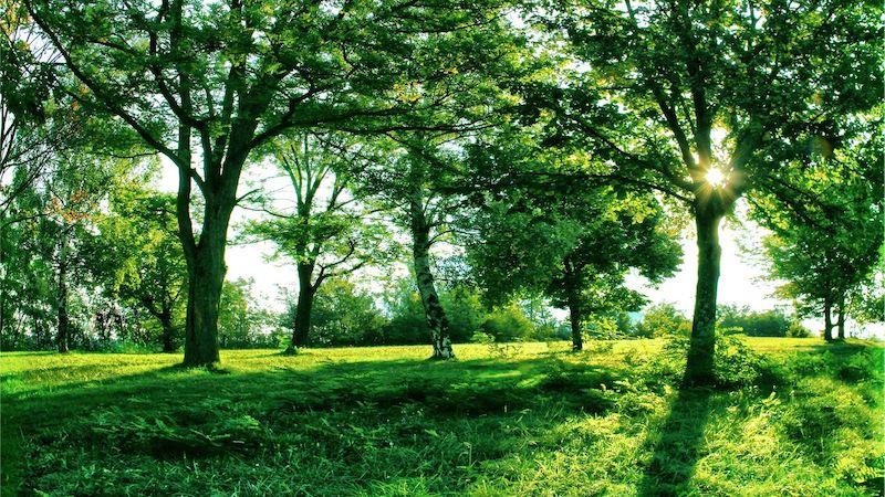 Nature Summer Trees Grass