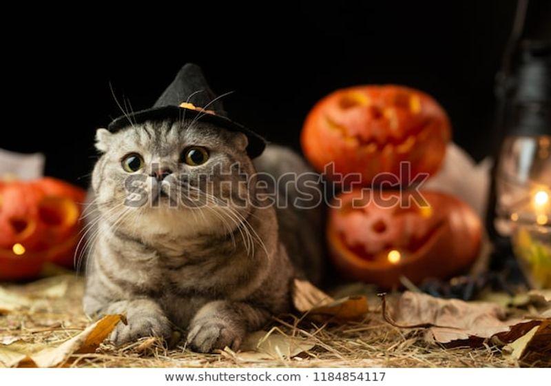 Halloween Cat Hat Stock