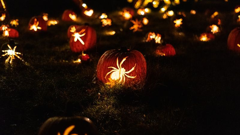 yellow spider decors during