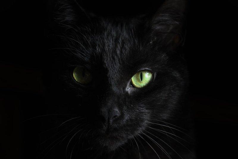 5 macro photography of black
